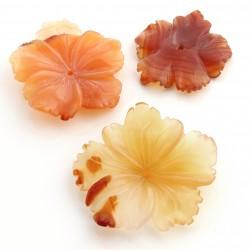 Flor de carneola – clavelina