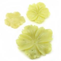 Jade limón - flor clavelina